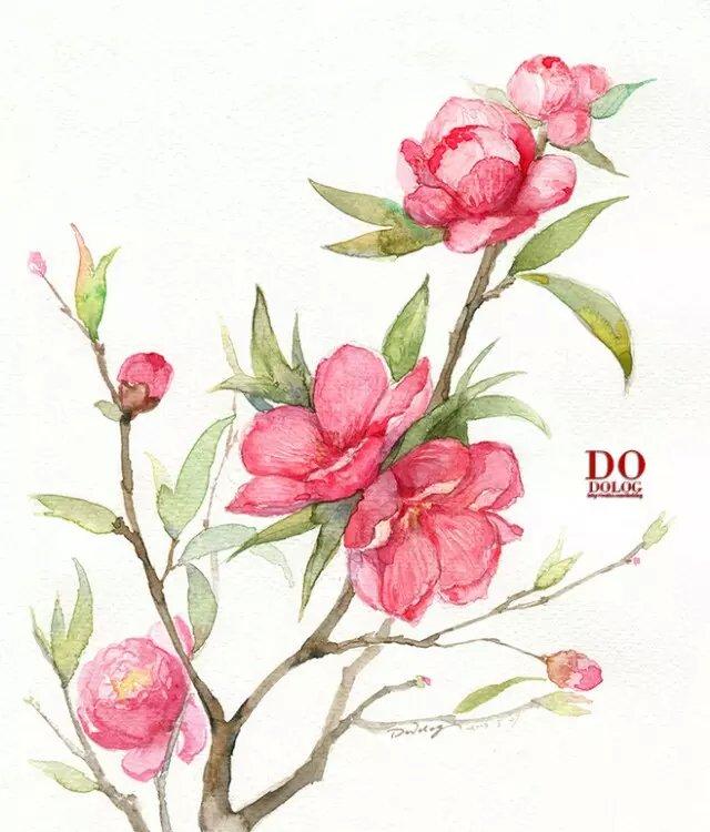 学科区 以文会友 『植物水彩手绘系列  「夹竹桃」 「石榴花」