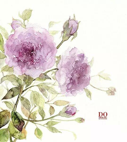 『植物水彩手绘系列