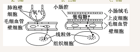 动物细胞的线粒体是2层膜,其他有膜结构的细胞器是1层膜,细胞膜是一层